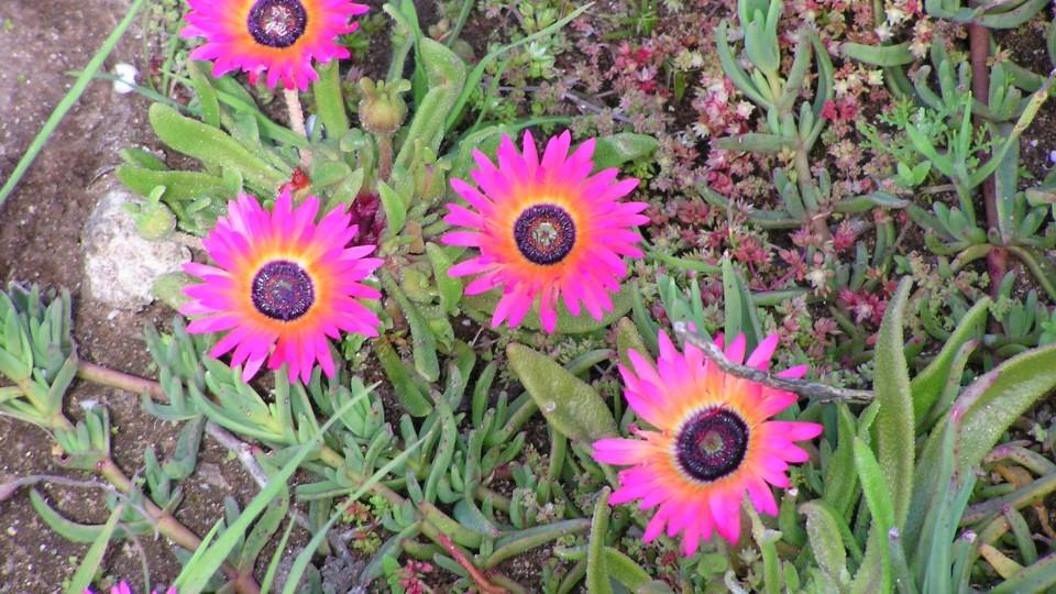 Balkonové rostliny, které snesou žár