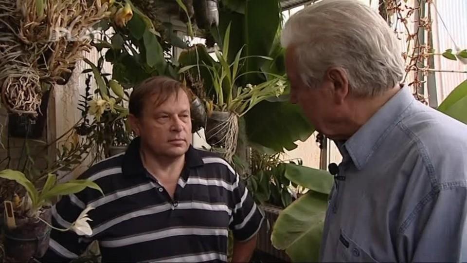 Proč nekvetou orchideje