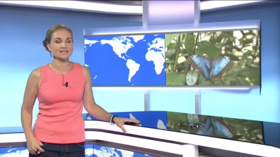SVĚT: Panamský prales a indiánova čeština