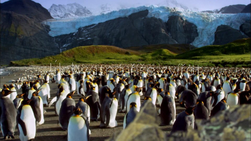 David Attenborough: Příběh tučňáka (1) - upoutávka