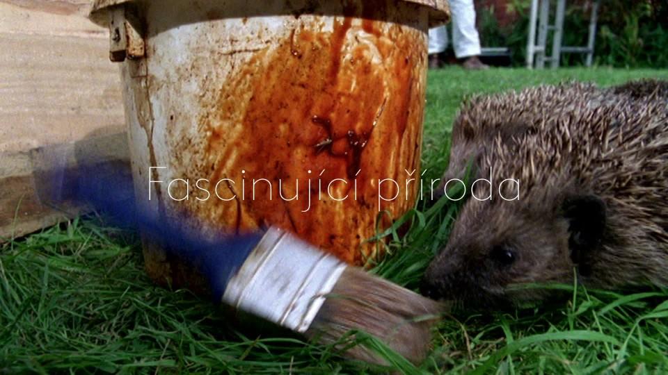 Přírodní kuriozity Davida Attenborougha II (1) - upoutávka