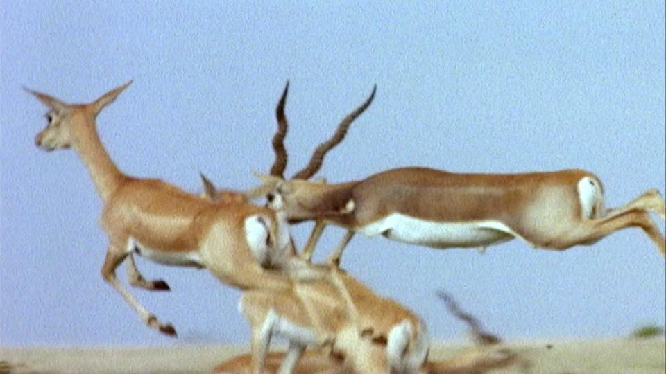 David Attenborough: Život savců (1) - upoutávka