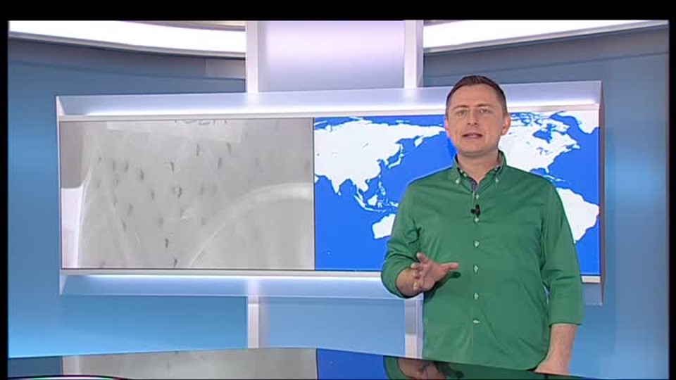 SVĚT: Kde žijí komáři s virem zika
