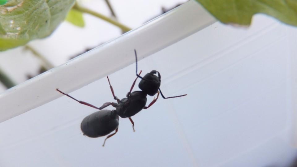 Jak na mravence v bytě