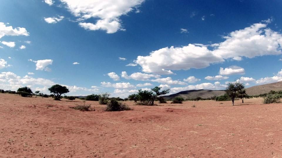 Surikaty z Kalahari II (3)