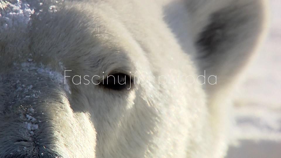 Léto ledních medvědů - upoutávka