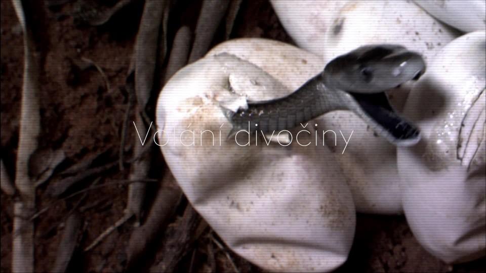 Mamba černá: Polibek smrti - upoutávka
