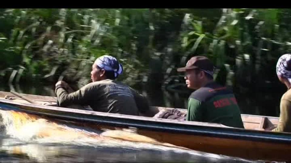 SVĚT: Stěhování orangutanů
