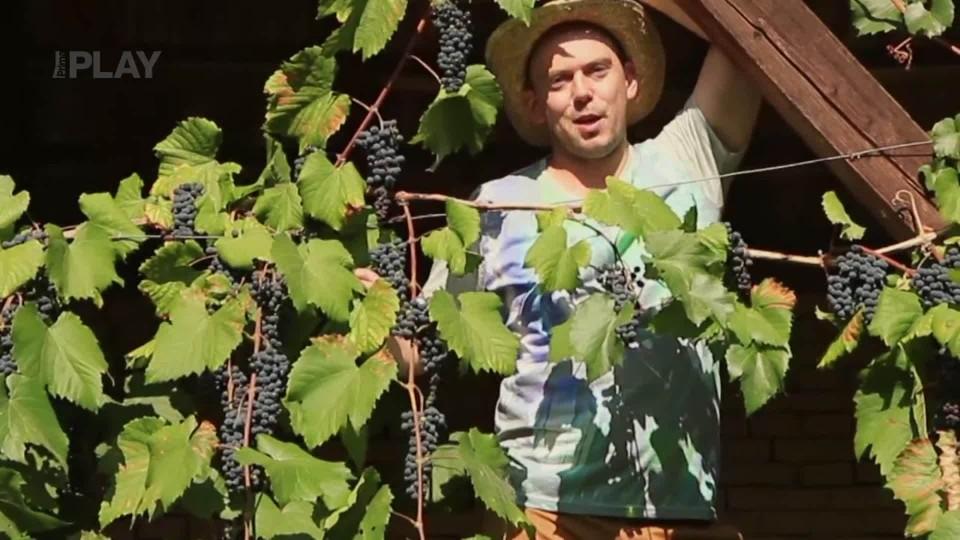 Vychytávky Ládi Hrušky - Udělejte si na zahradě vlastní vinohrad