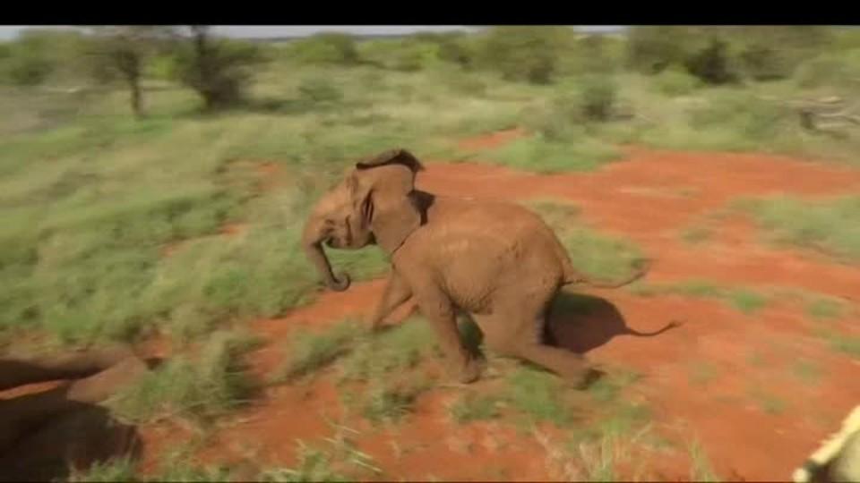 SVĚT: Sloni a železnice skrz rezervaci