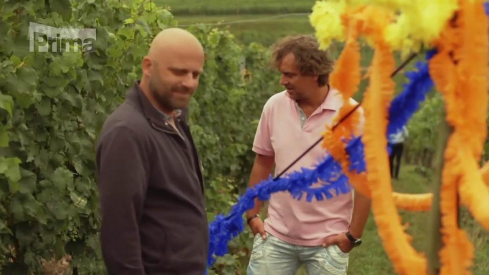 Bomba ve vinohradě