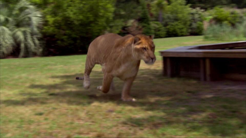 Neuvěřitelní tvorové zvířecí říše (1) - upoutávka