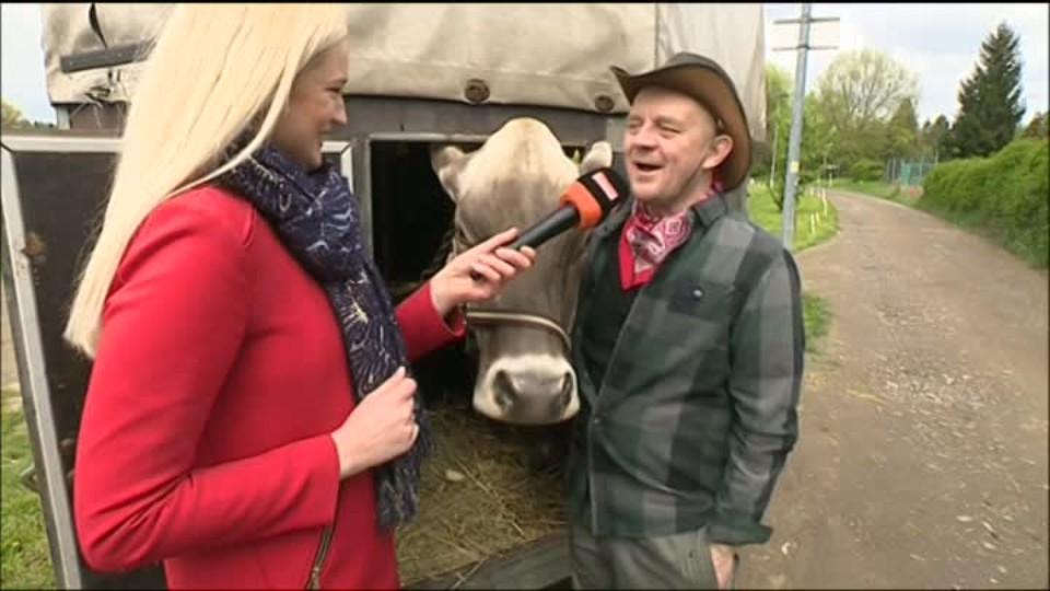 TOP STAR 24.4.2016 - Přístav - dojení krav