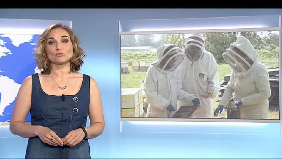 SVĚT: Kanada zachraňuje včely