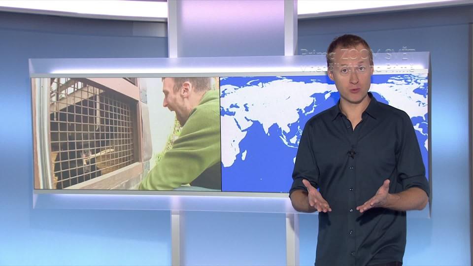 SVĚT: Záchrana laboratorních šimpanzů