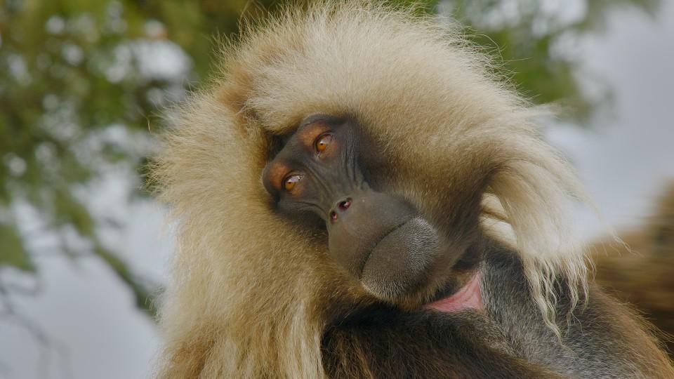 V zemi primátů (2)