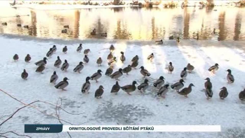 Ornitologové provedli sčítání ptáků
