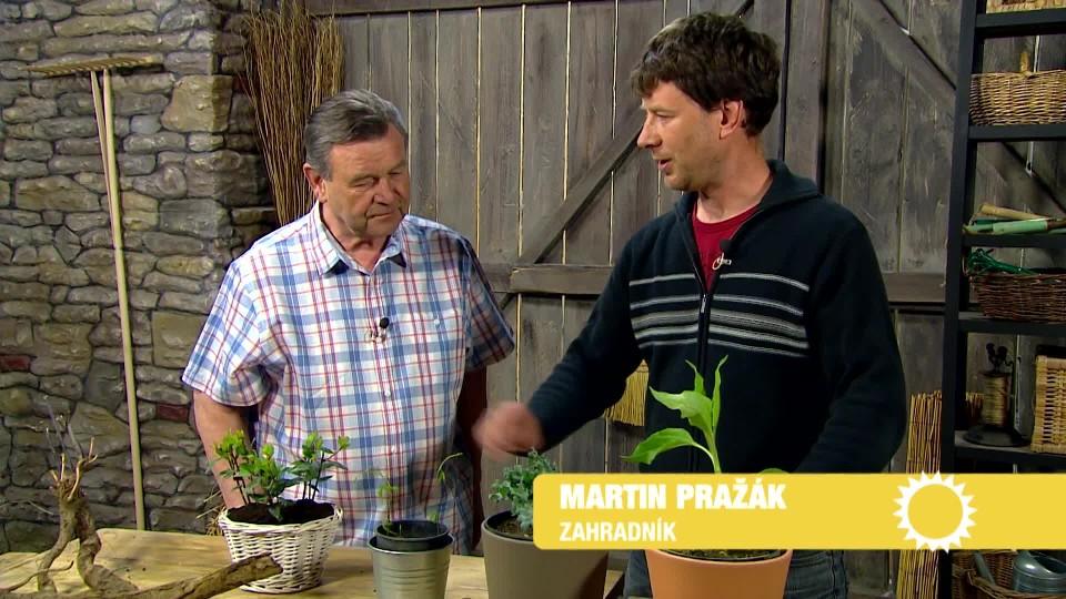 Jedlé hlíznaté rostliny