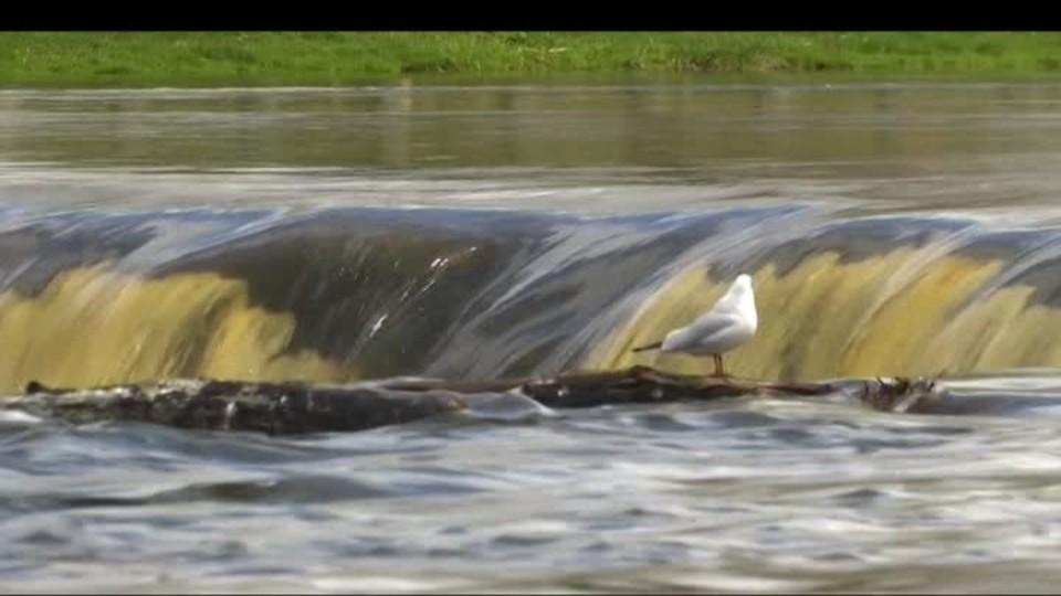 SVĚT: Ryby přeskakují nejširší vodopád