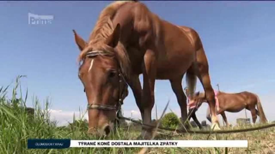 Týrané koně dostala majitelka zpátky