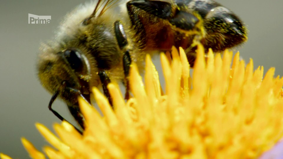 Tajemství barev 3 - jak svět vidí včely