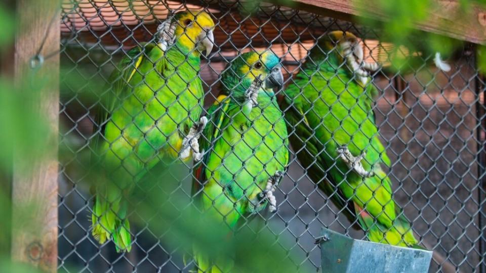 Vychytávky Ládi Hrušky - Papoušci