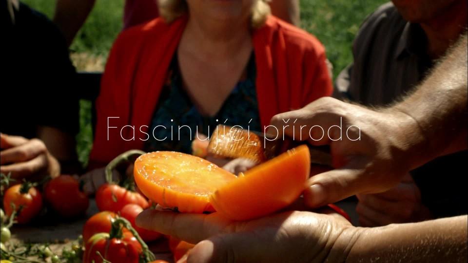 Pravda o rajčatech - upoutávka