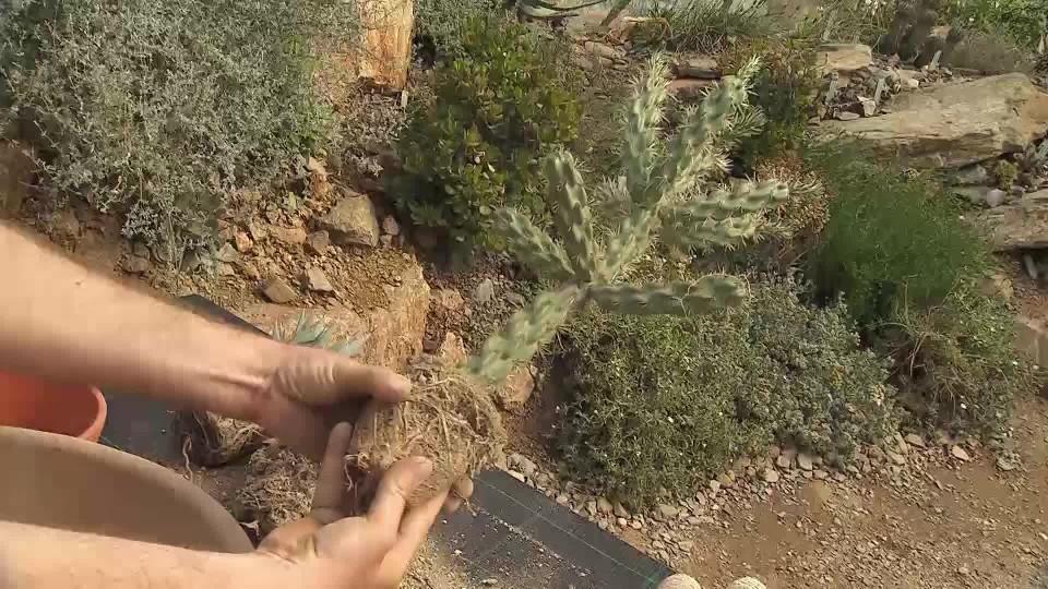 Aranžmá z kaktusů