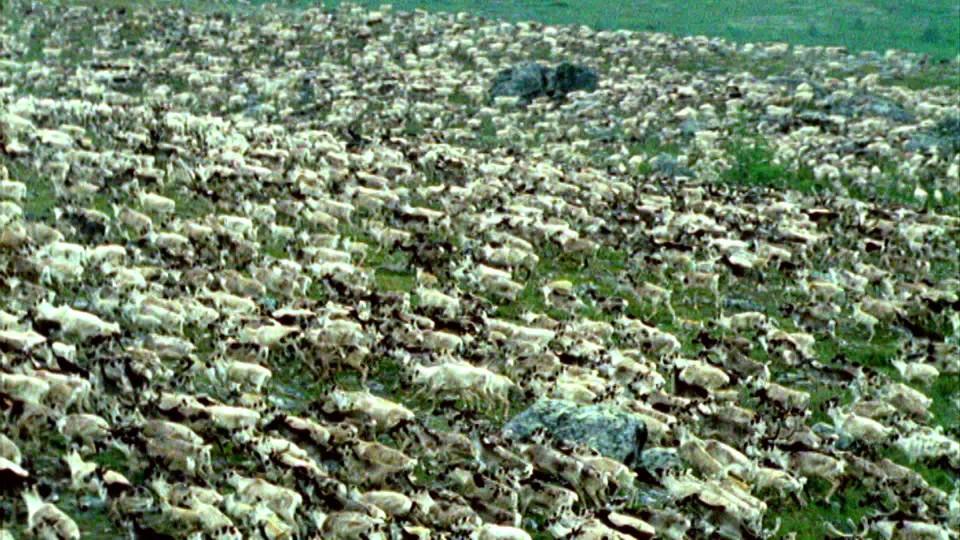 David Attenborough: Život savců (6) - upoutávka