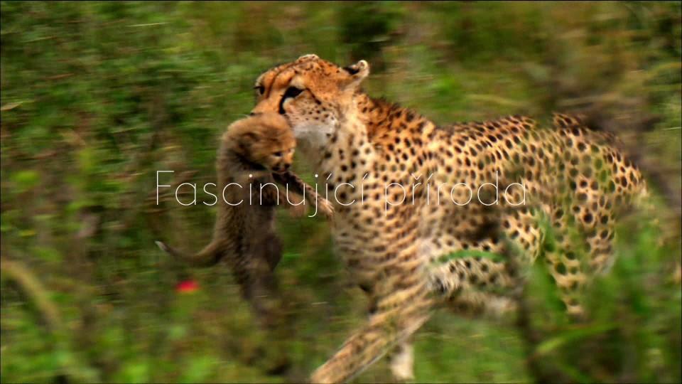 Gepardí matka - upoutávka