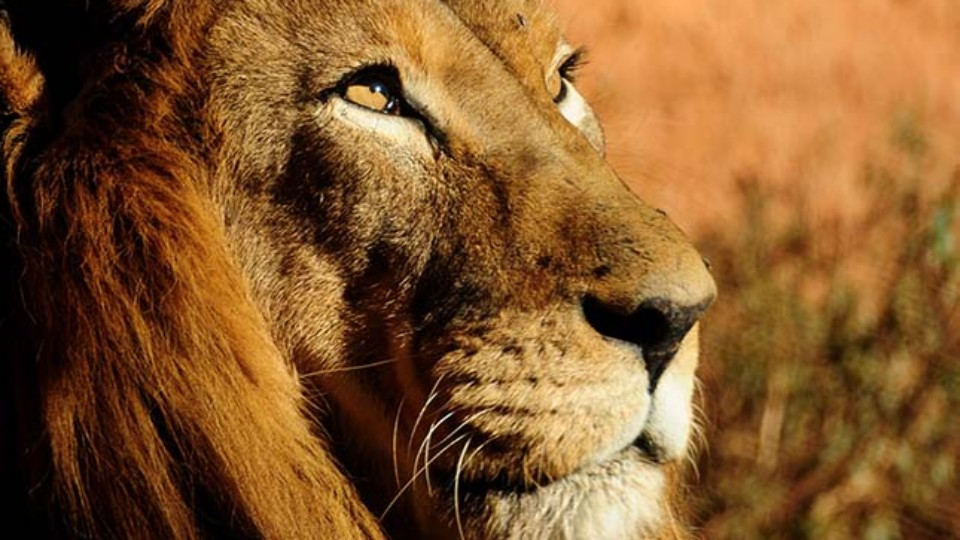 Územní válka: Lvi a hroši