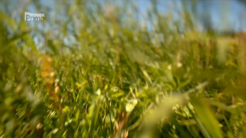 Zelená planeta 3 - za co všechno múže tráva