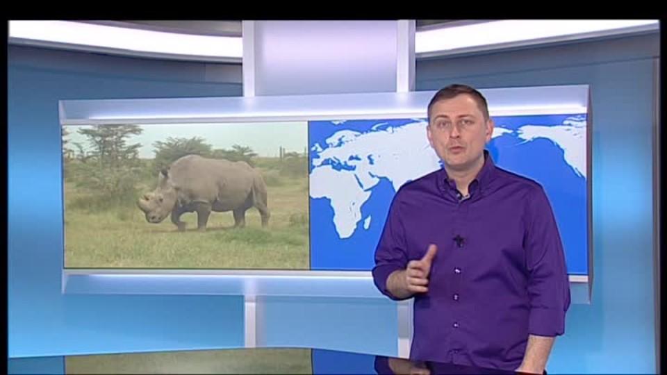 SVĚT: Poslední 3 nosorožci severní bílí