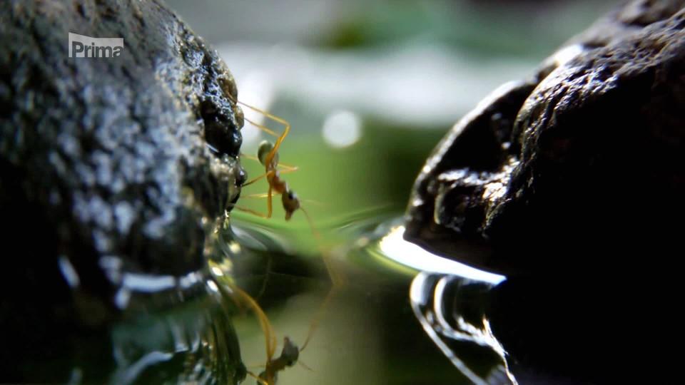 V říši stromových mravenců - překonávání překážek