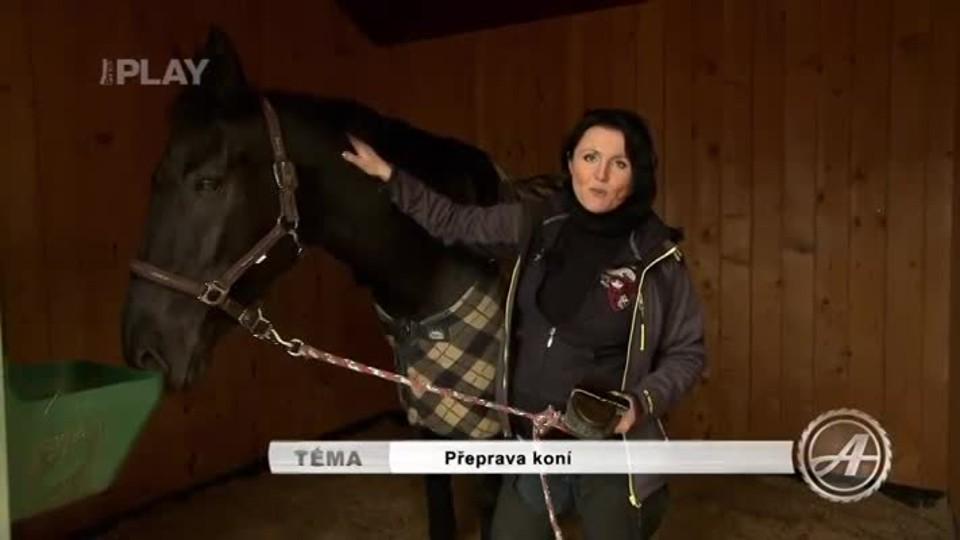 Přeprava koní