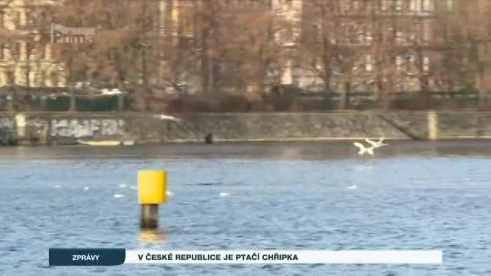 V České republice je ptačí chřipka