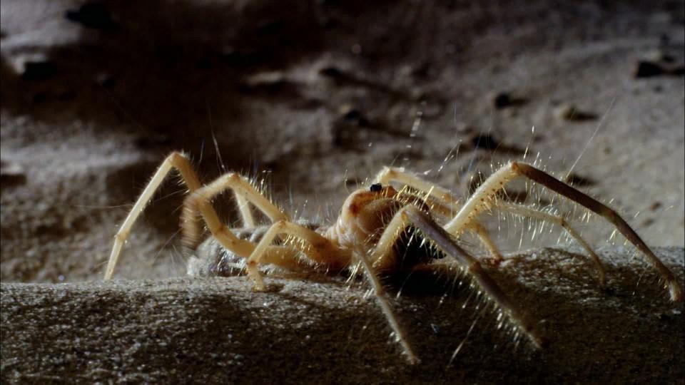 David Attenborough: Mikro monstra (1) - upoutávka