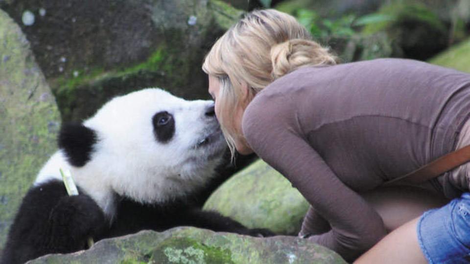 Kýchající Panda