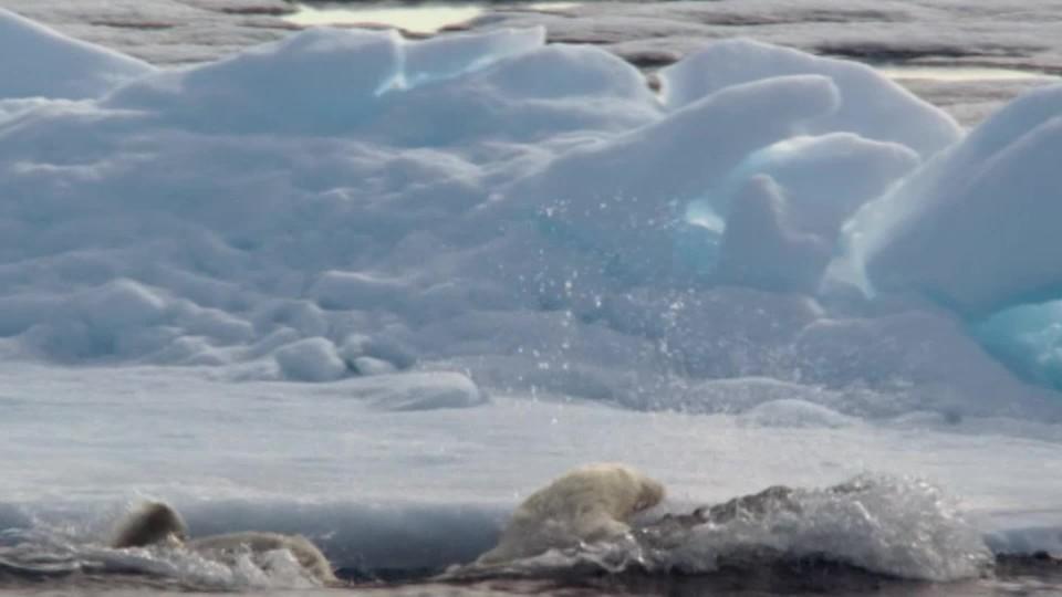 Lov 2 - útok ledního medvěda