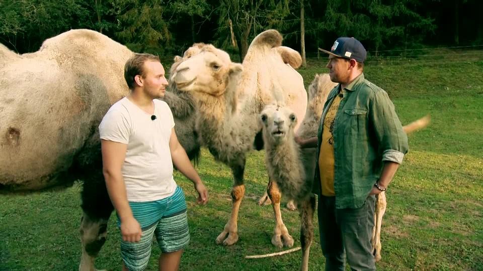 Vychytávky Ládi Hrušky 2018 (25): Mazlík velbloud