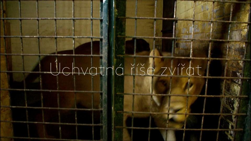 Návrat lvího krále - upoutávka