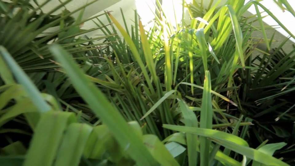 Jak probudit tropické rostliny
