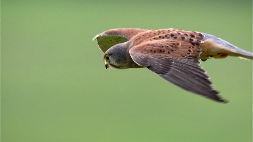 David Attenborough: 60 let v divočině (1) - upoutávka