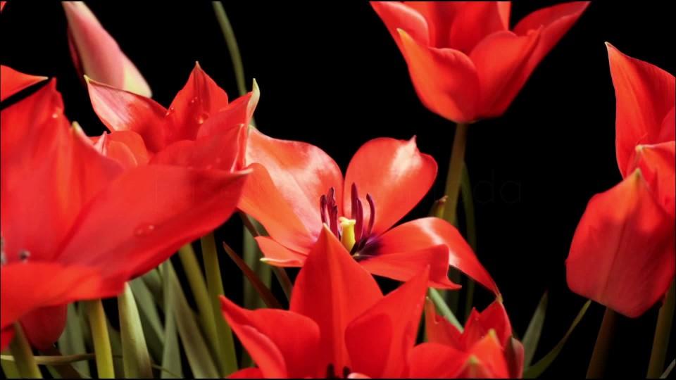 Odysea rostlin (1) - upoutávka