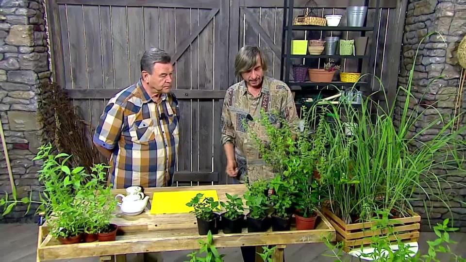 Aromatické rostliny s citrónovou vůní