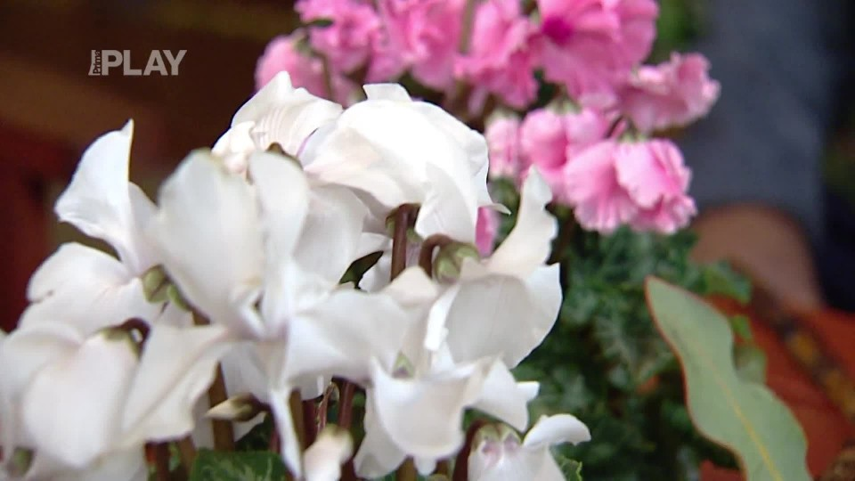 Květiny na vánoční stůl