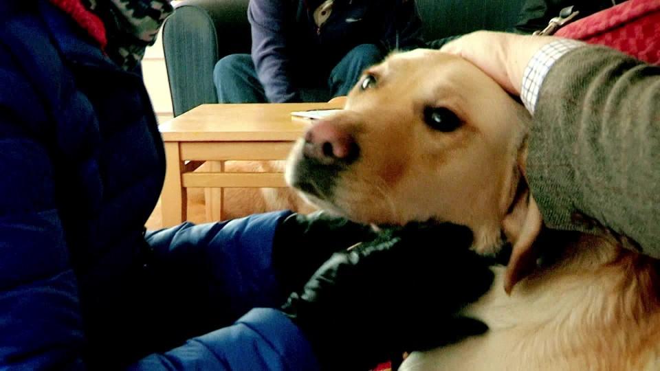Můj psí pomocník (1) - upoutávka