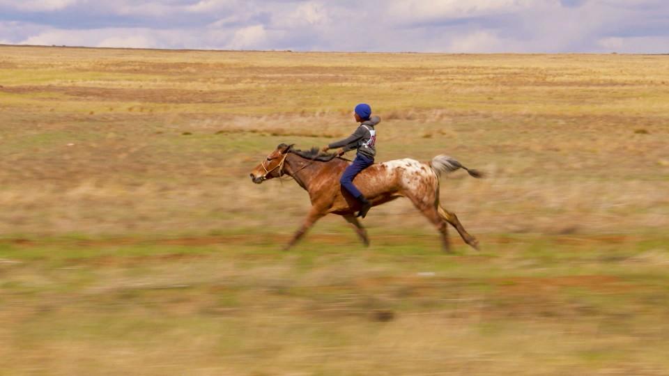 Koně velké Rusi (5)